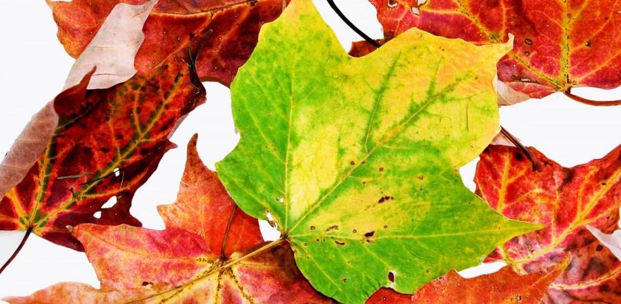 Leaf lessons
