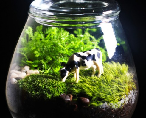 Going green: make your own terrarium