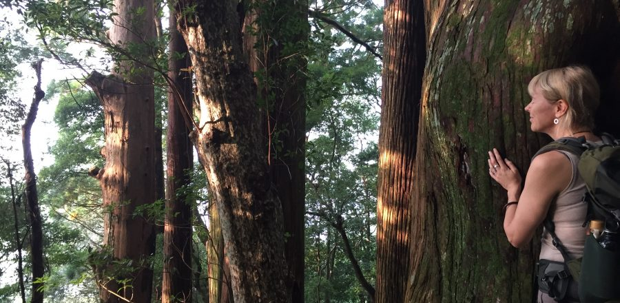 Shinrin Yoku: The healing power of forest bathing